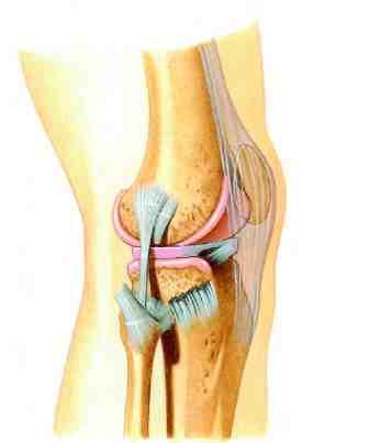 Los refuerzos laterales de la rodilla. Ligamento lateral interno y ...